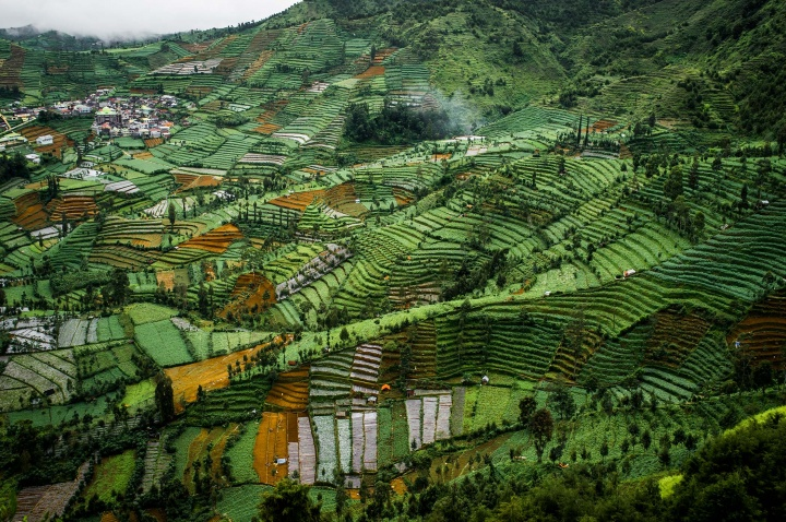 Rice paddies in Dieng, Java.