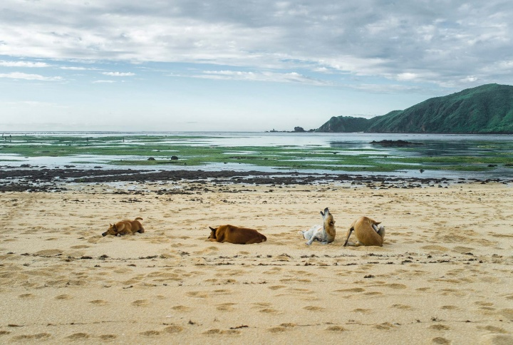 Dogs relaxing on the beach.