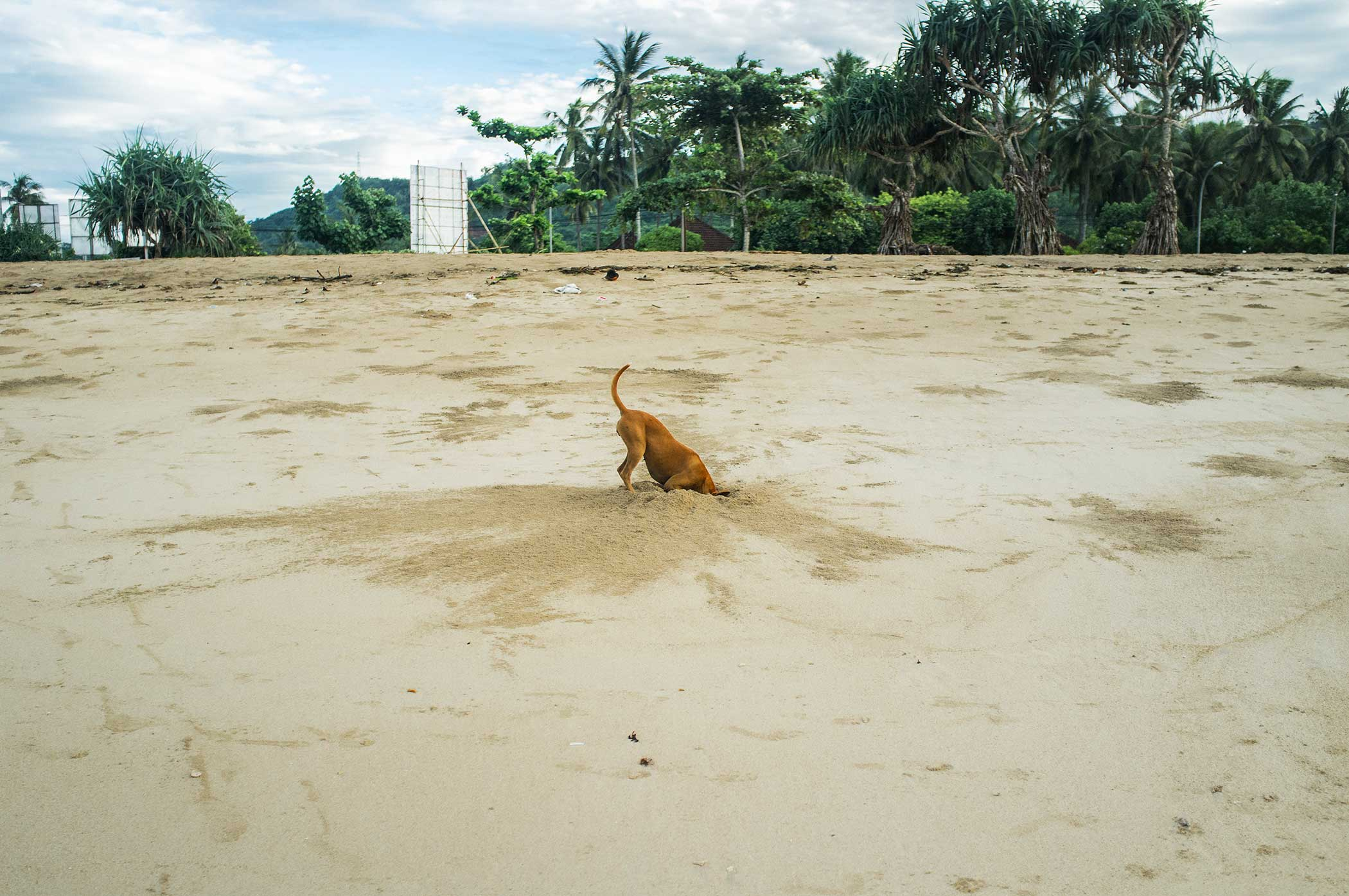 Dog in search of crab.