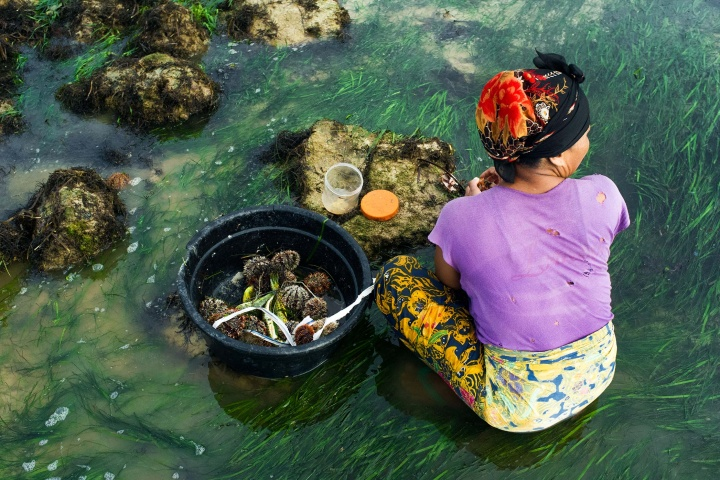 Woman opening sea urchins with her bare hands.