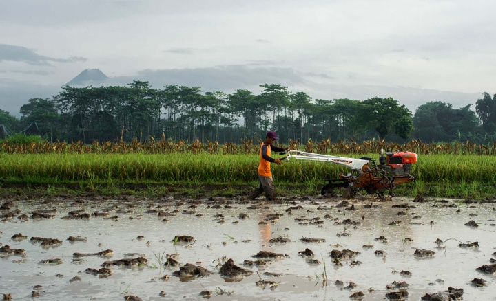 A man ploughs a field in Magelang.