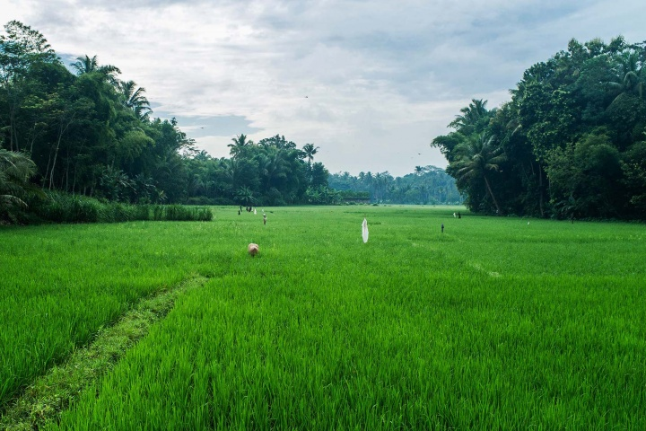 Land in Magelang is highly fertile, so locals don't waste any time and cover it with rice paddies.