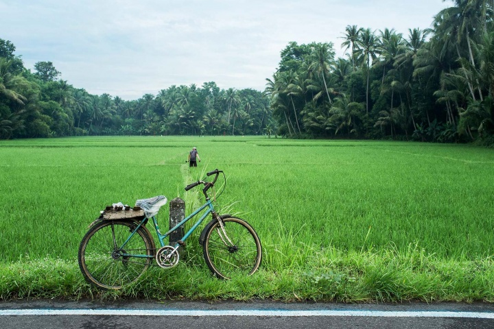 Magelang's fertile land covered in rice paddies.