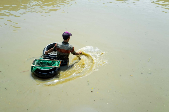 Local man using a net to catch 'fresh' water cockles in the polluted waters of river in Surabaya.