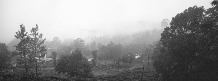 Fog over Piduruthalaga Forest Reserve.