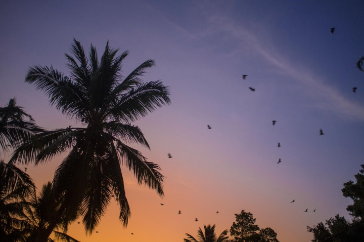 Tissa might not be many things I would hope to see in Sri Lanka, but what Tissa is, is a bat parade. That can be seen especially in the evening. Before sun sets, bats waking up and screamingly leaving their trees to seek their meal.